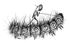 caterpillarsurfer-trickslattery.jpg